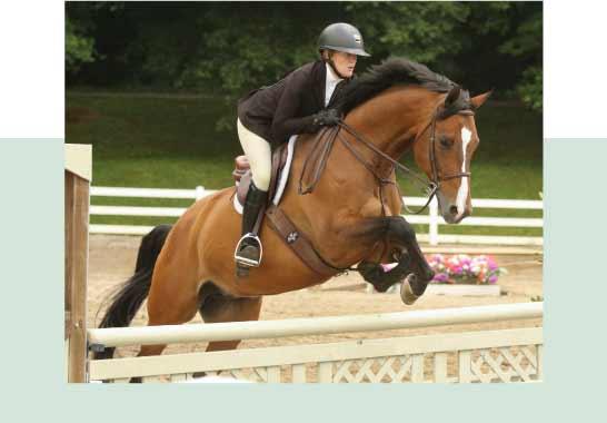 equestrian-farm