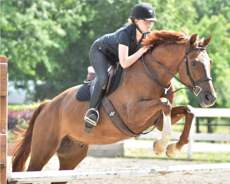 structured-lessons-with-horses
