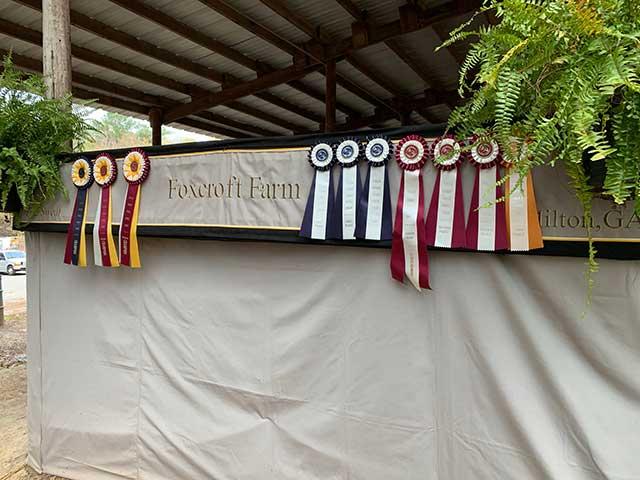 Georgia Hunter Jumper Association Finals